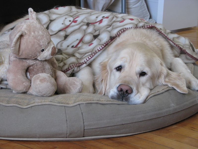 Teddy Therapy