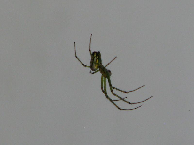Creepy Spider @ www.picturetrish.com