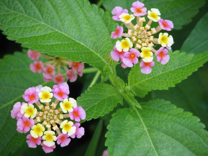 Flowers on Riverwalk, San Antonio, TX