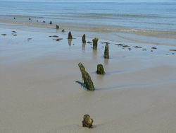 Old dock pilings found at low tide @ picturetrish.com