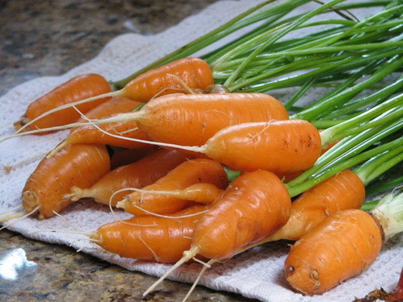 Carrots at friendsfoodfamily.com